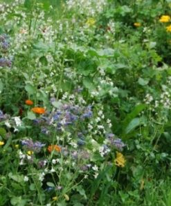 Gras en kruiden zaden