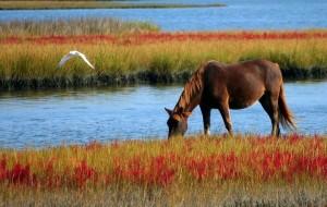 Paard in wilde weide