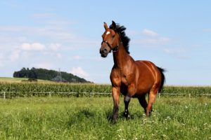 kruiden voor paarden