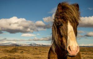 Paarden eten kruiden
