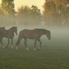 luchtwegproblemen bij paarden, aandoeningen, chronisch, astma, bronchitis, voeding, essentiële olie