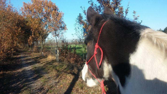 Zouttherapie voor paarden, luchtwegproblemen, hoesten halotherapie, medicinaal zout