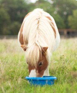 pure horse box okapi glitter shetlander biologisch