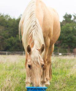 pure horse sunny. maaltijdbox bio natuurlijk paard