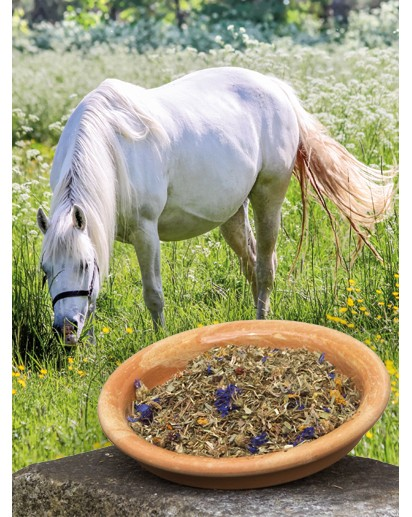 zomerkruiden, pure horse, okapi, kruiden voor je paard, gezonde paarden voeding