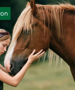 Cadeaubon paarden Pure Horse cadeau
