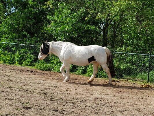 webinair kpu, kryptopyrrolurie, pure horse, blog