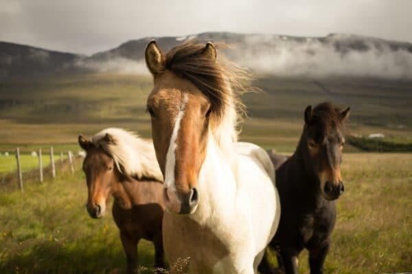 probiotica, pure horse, blog
