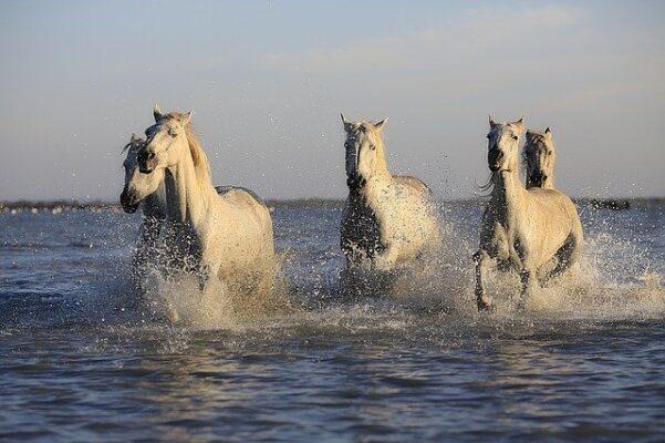 vitamines en mineralen, pure horse,